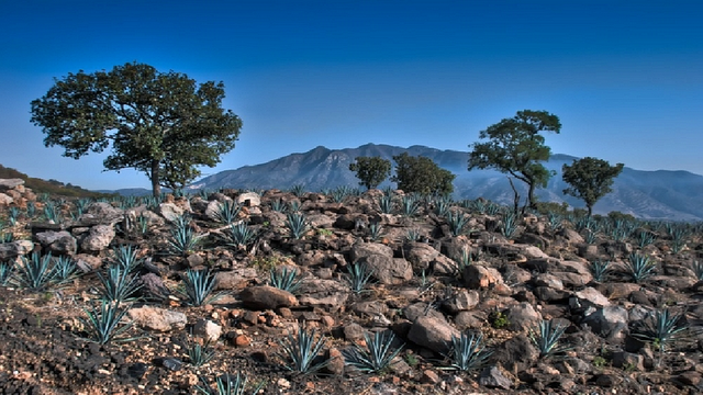 Tequila Pueblo Magico