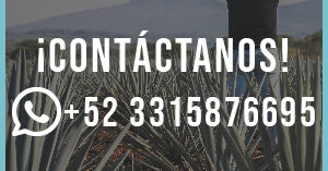 contacto_whatsapp